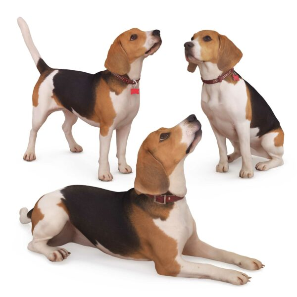 beagle 3d dog collection