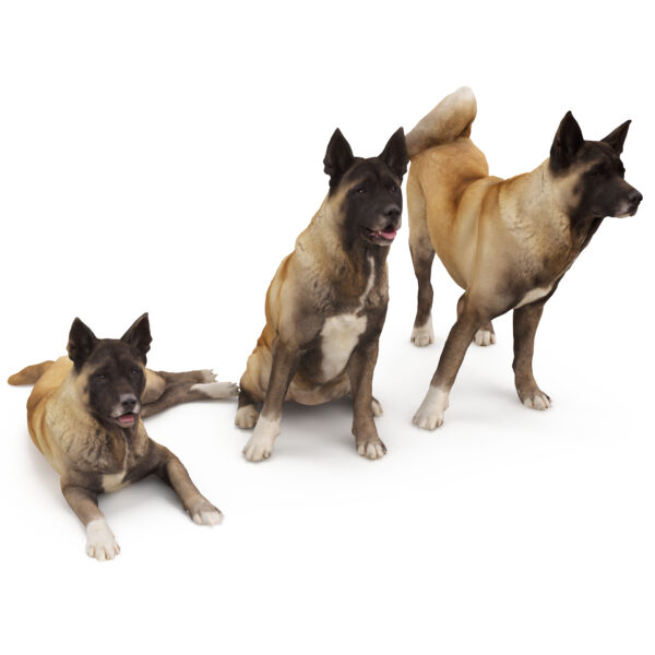 Akita 3d dog collection x3 3d models - Renderbot
