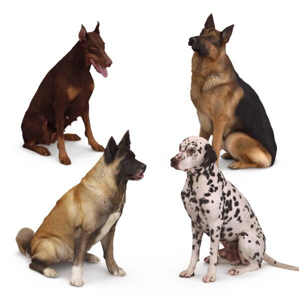 3d scanned dogs sitting pose x4 3d models - Renderbot