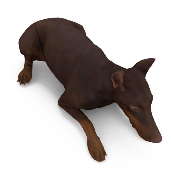 Doberman 3d dog lying scanned 3d model - Renderbot