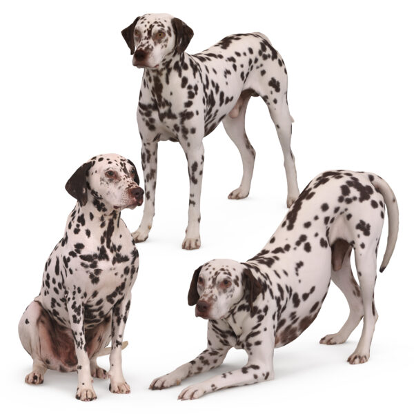 Dalmatian 3d dog collection x3 3d models - Renderbot