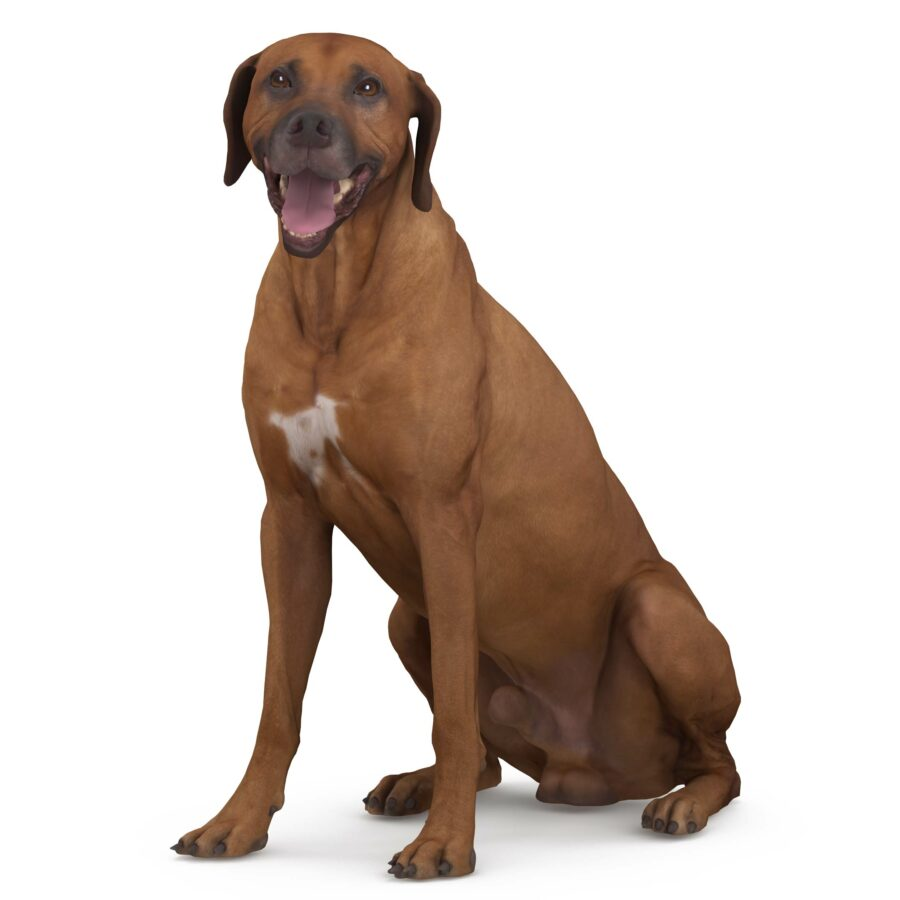 Ridgeback 3d dog sitting scanned 3d model - Renderbot
