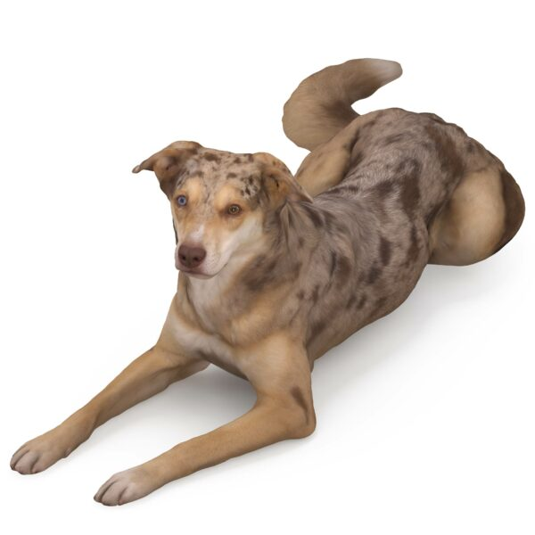 Metis 3d dog lying scanned 3d model - Renderbot
