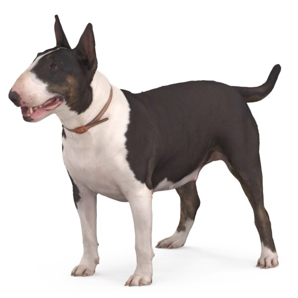 Bull terrier 3d dog scanned 3d model - Renderbot