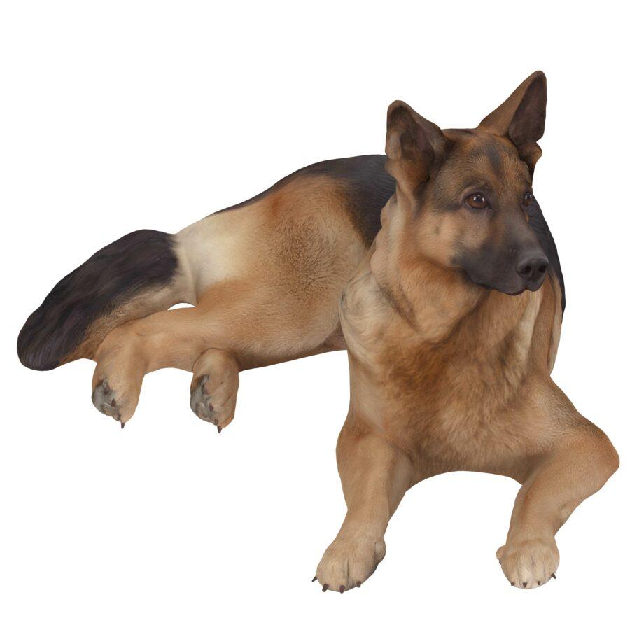 Sheepdog lying 3d dog scanned 3d model - Renderbot