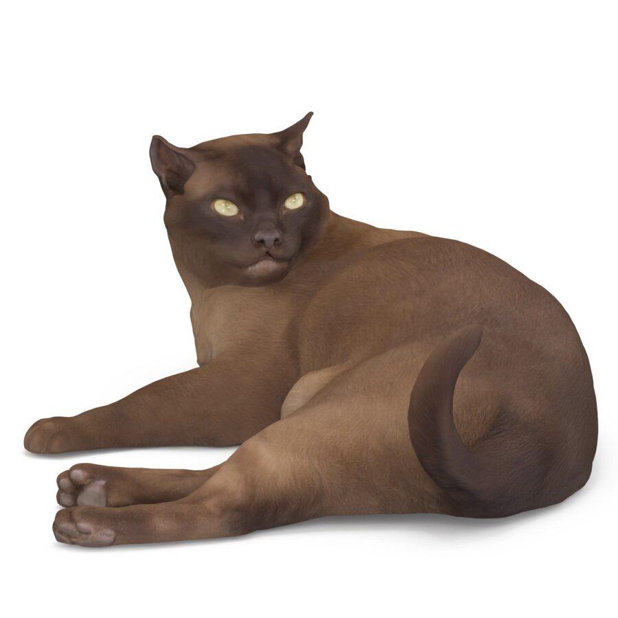 Abyssinian 3d cat lying pose scanned 3d model - Renderbot