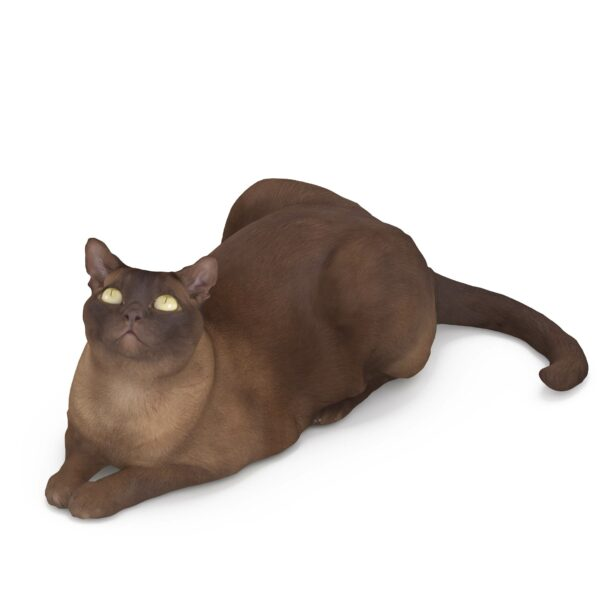 Abyssinian 3d scanned cat - scanned 3d model - Renderbot