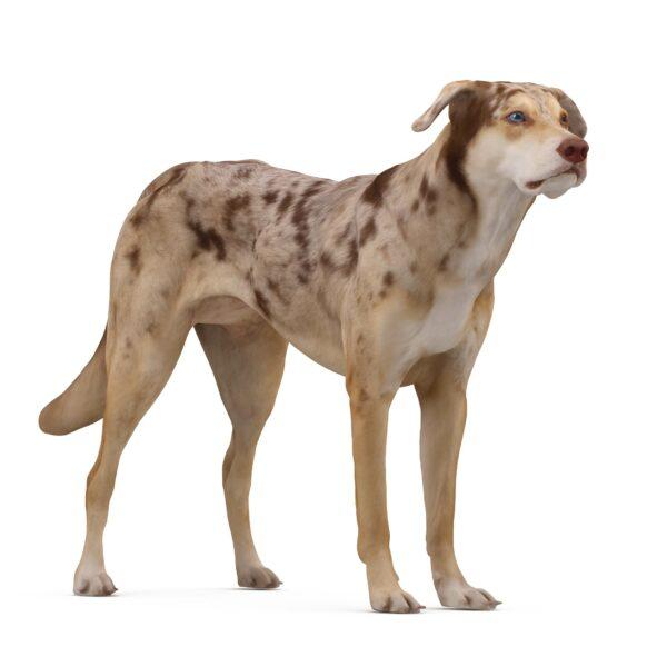 Metis standing 3d dog scanned 3d model - Renderbot